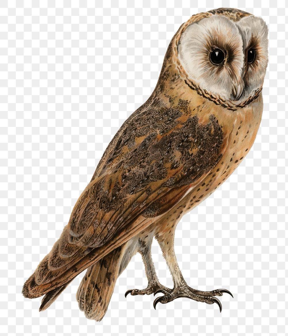 Barn Owl Bird Png Hand Drawn Free Image By Rawpixel Com Paeng Owl Png Barn Owl Bird