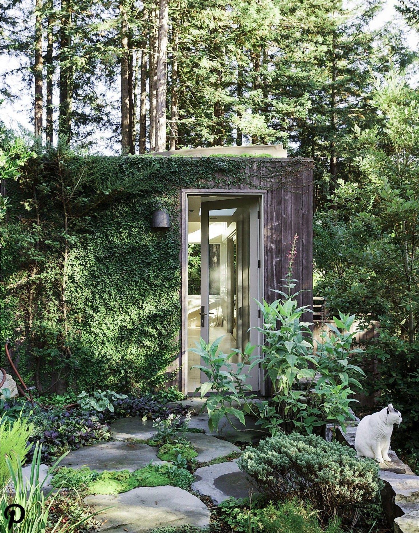 Fig Garden Yoga : garden, Gardening, Creeping, Backyard, Studio