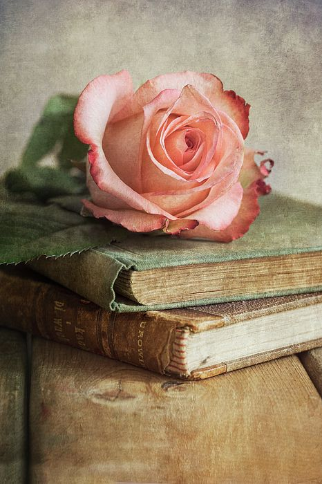 Still life with pink rose and old books by Jarosla