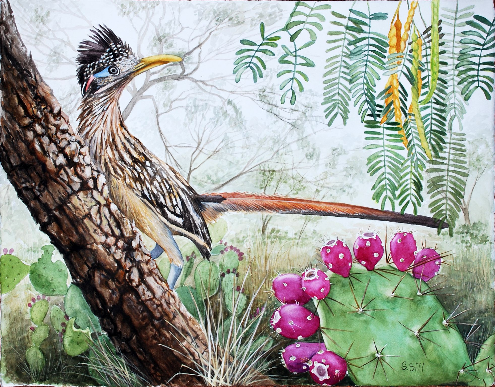 Watercolor artist in texas - Roadrunner In South Texas Mesquite Brush Watercolor Painting By Sue Sill
