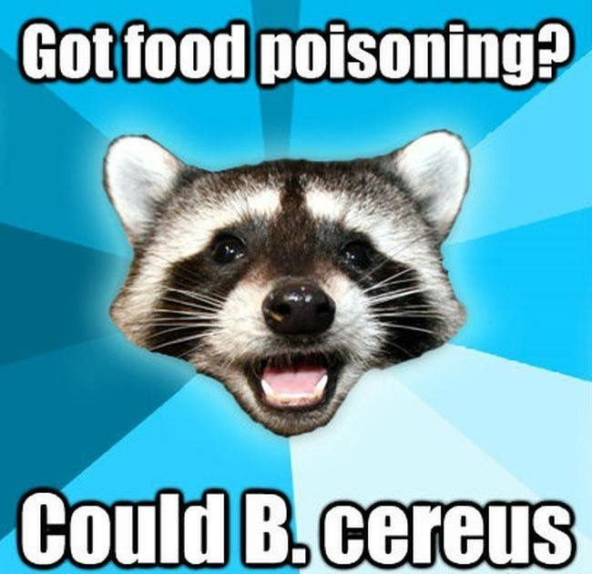 here are the newest and best entries for the long running lame pun raccoon meme images via quickmeme you may also like best of the friend zone fiona meme