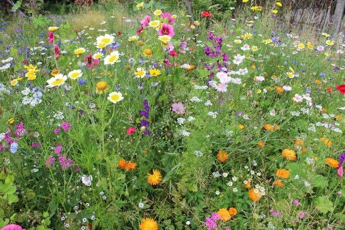 Von der umwelt inspiriert naturgarten anlegen pinterest for Gartengestaltung verwunschen