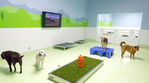 Citydog Club Gilt City Los Angeles Custom Dog Kennel Dog