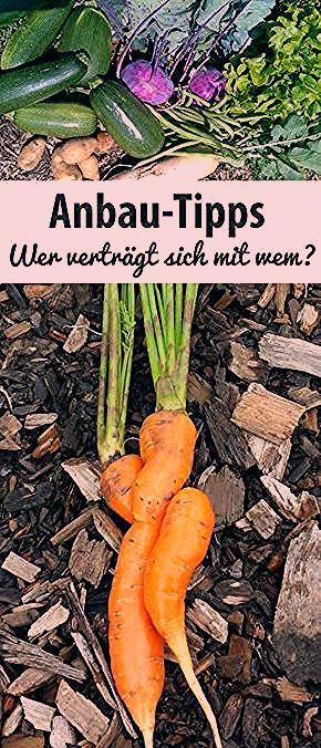 Photo of Anbau-Tipps – Wer verträgt sich mit wem? – grüneliebe.de