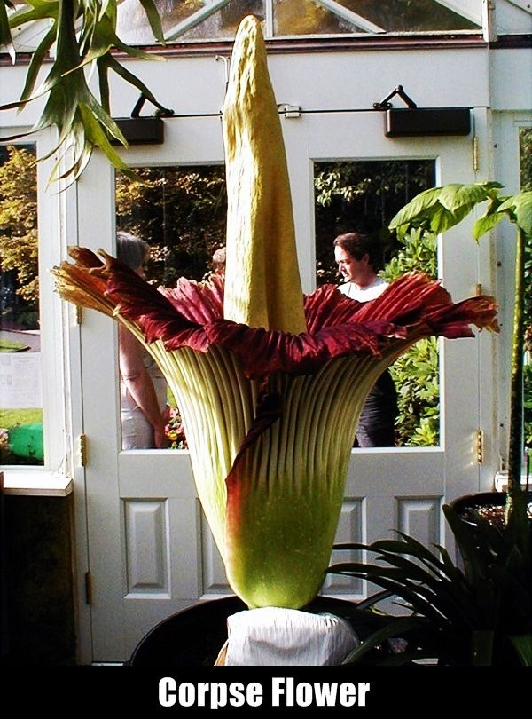 Top 15 Rarest Flowers In The World Corpse Flower Rare Flowers Plants