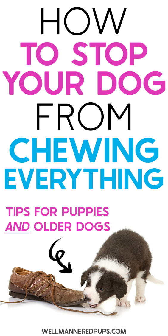 How To Stop Dogs From Chewing Dog Brain Stop Dog Chewing Dog Chews