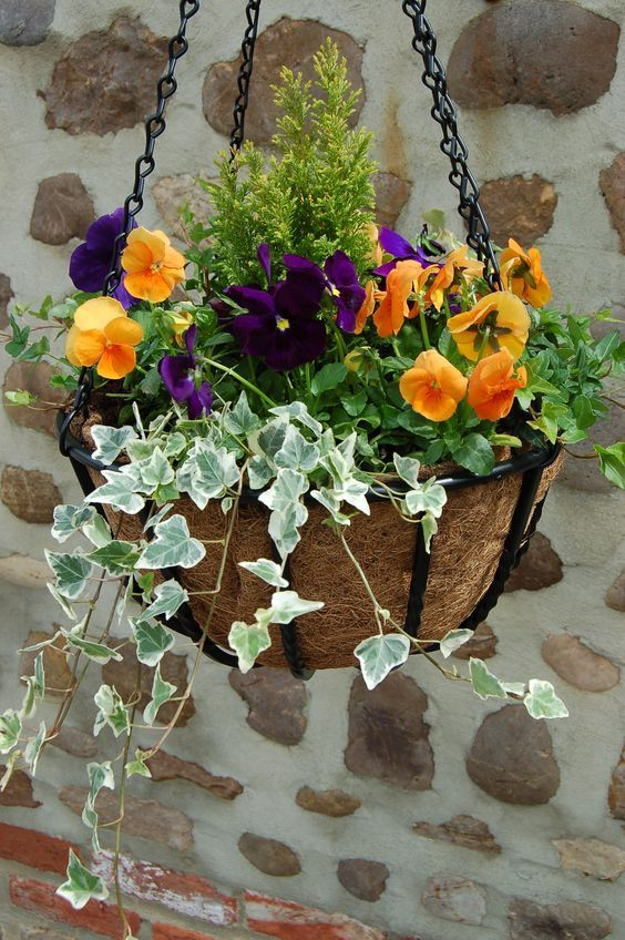 Don't neglect your hanging baskets in Autumn. A little bit of dead-heading, watering and feeding can keep them going until mid-late autumn. Once they are past their best, simply replant for winter/spring with spring flowering bulbs, winter heathers and trailing ivies to bring a little colour in to your garden over the cooler months.: