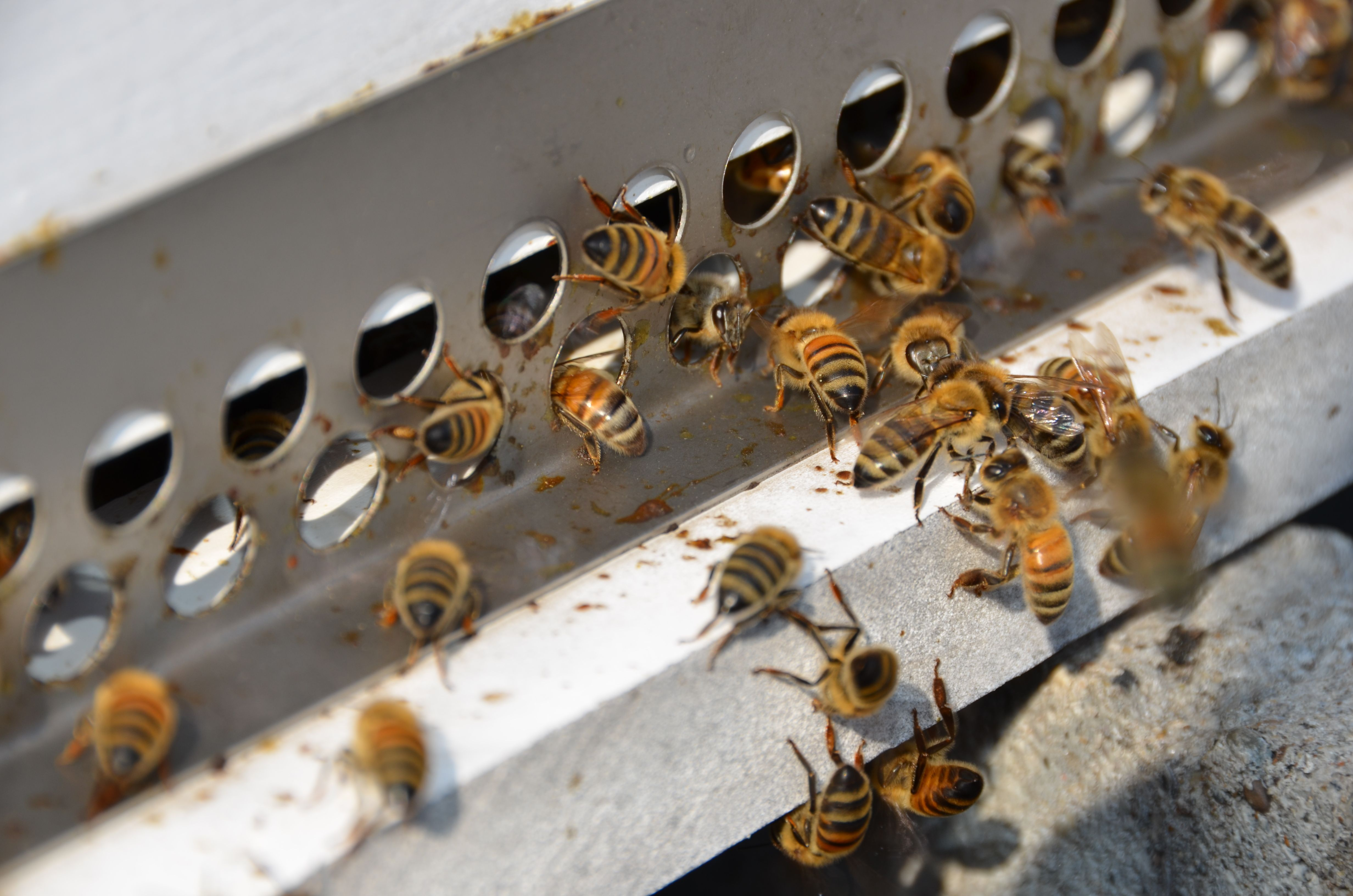 homewood apiary | bees | Pinterest | Beekeeping and Gardens