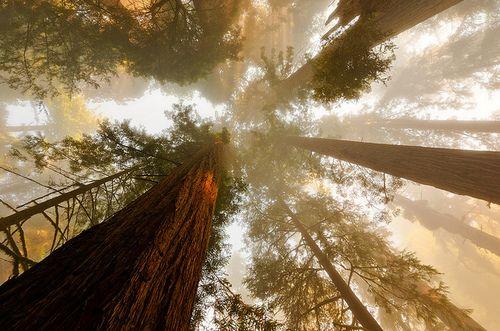 Long Trees...Sky Light....