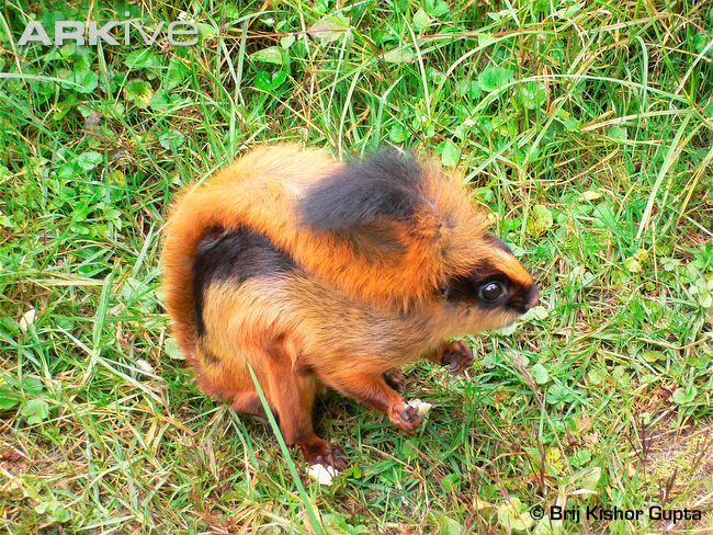 15 Most Beautiful Endangered Species Flying squirrel
