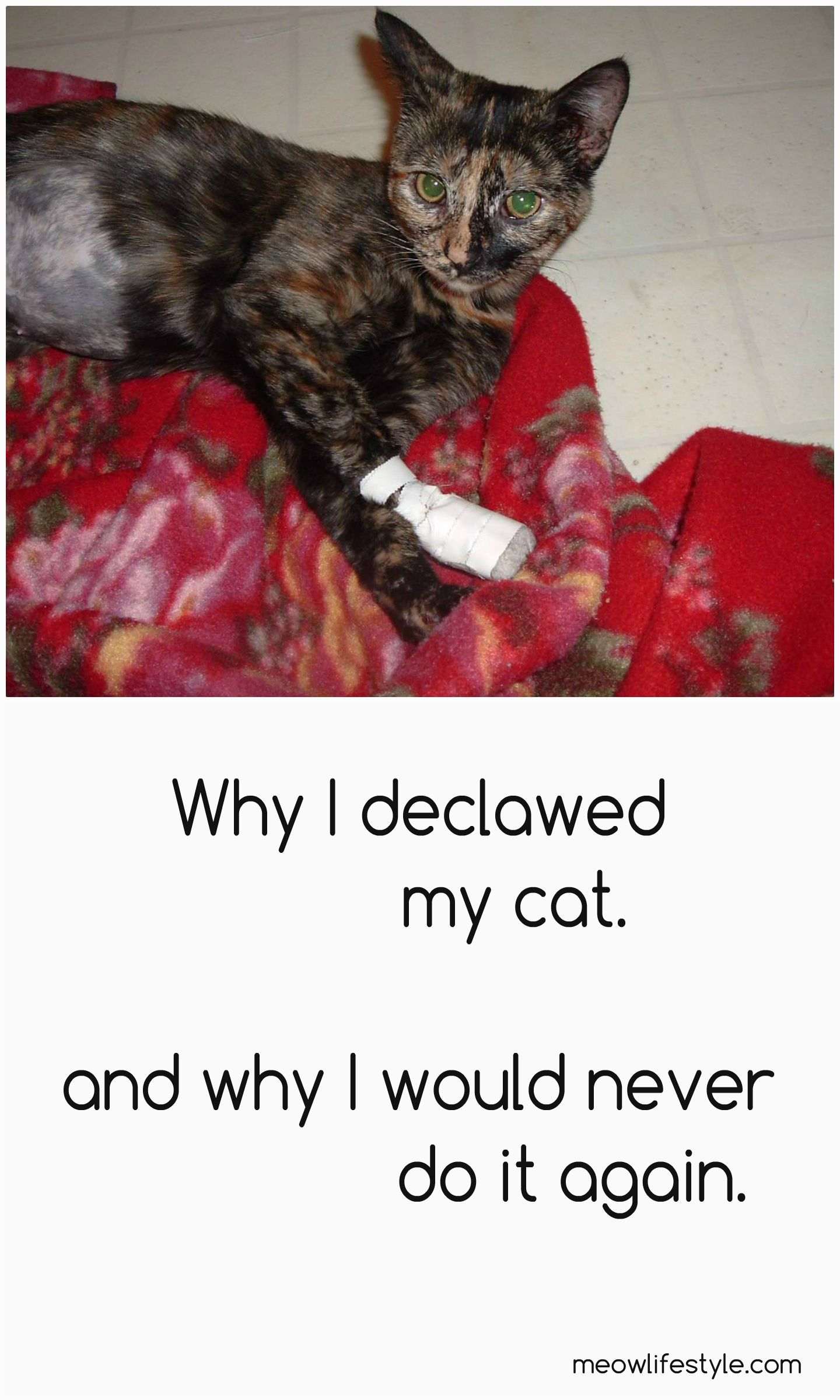 My Declawed Cat Cats, Cat nutrition, Cat diet