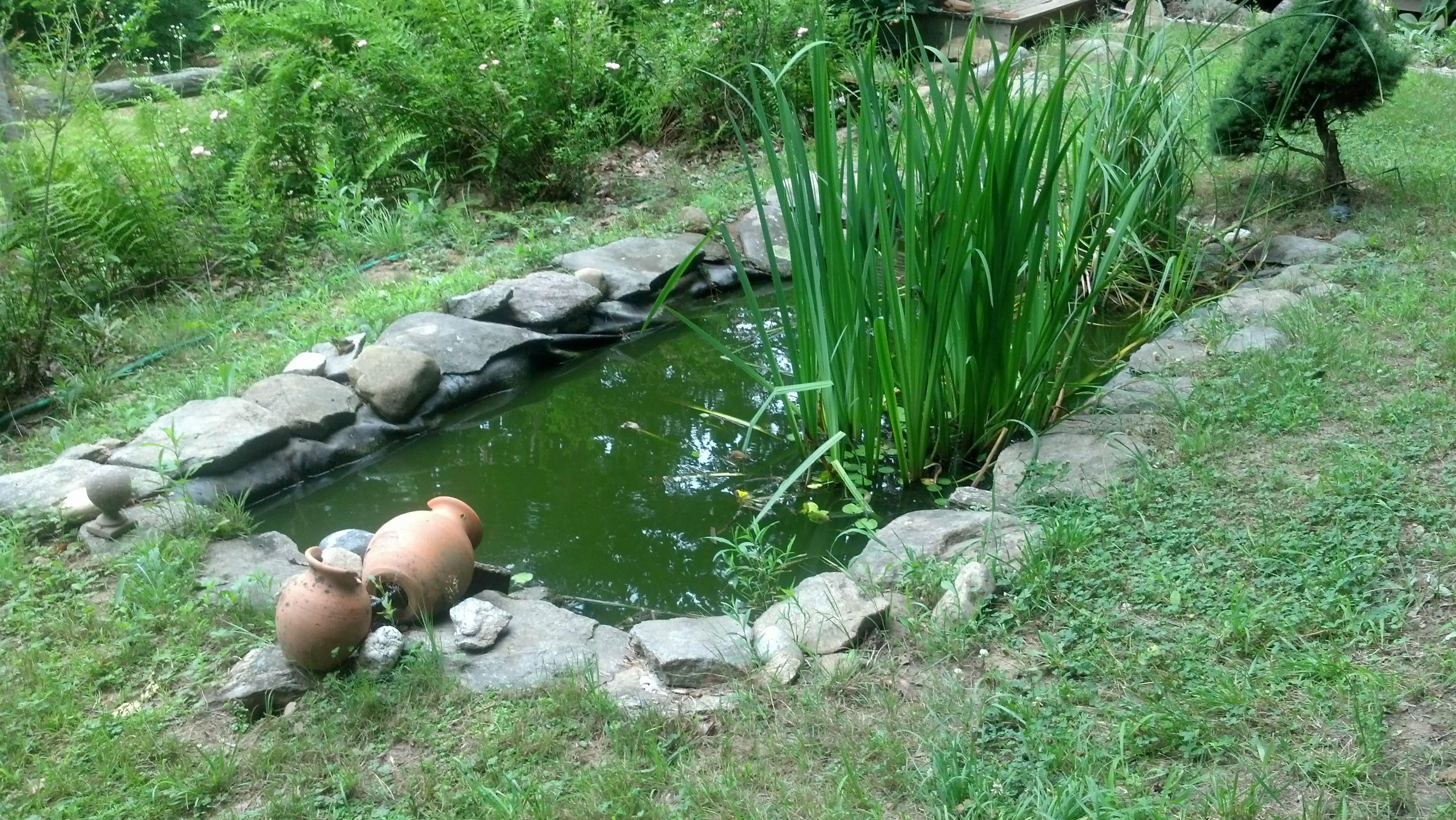 Frog Pond Backyard frog pond | garden | pinterest | pond, backyard and garden