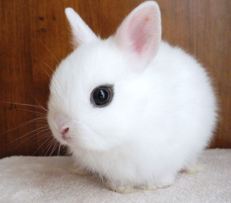 おすすめうさぎランキングtop10 120種類以上のうさぎから飼いやすくて人気の種類を厳選 Petpedia ペットペディア かわいい動物の赤ちゃん 動物のおもしろ動画 可愛すぎる動物