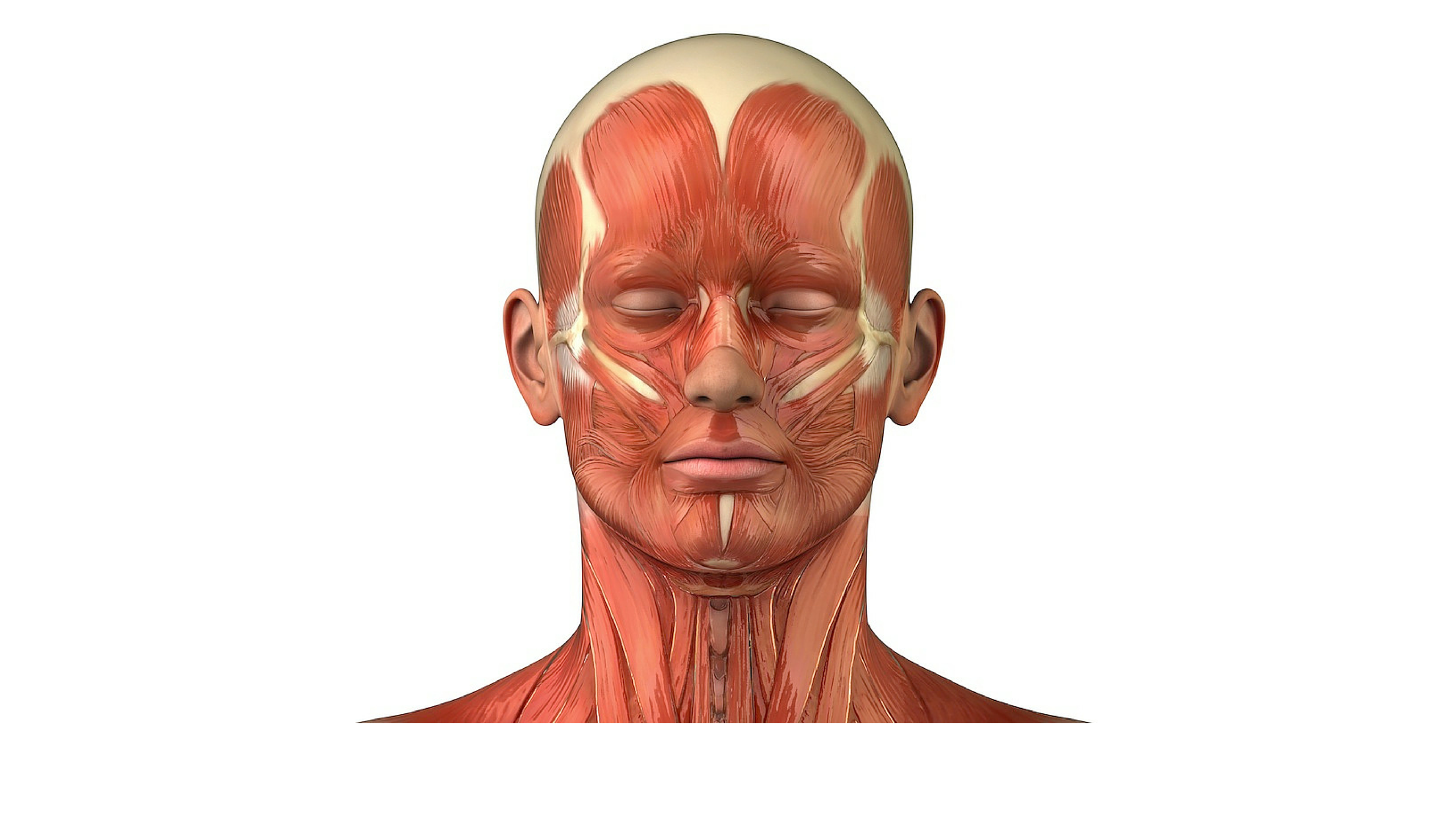 Anatomia Facial Musculos Da Face