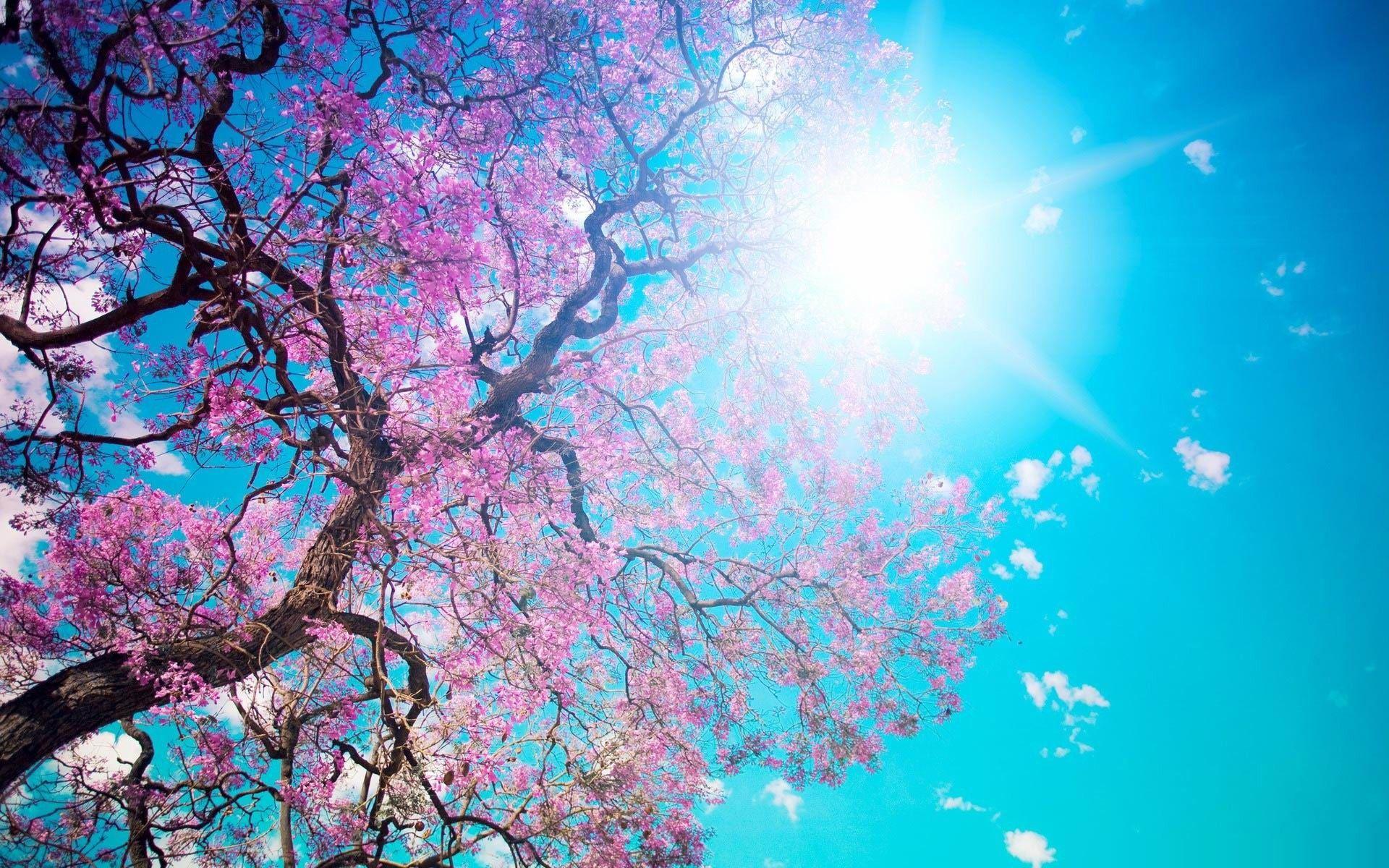 sunshine and blue skies.. #springdesktopwallpaper
