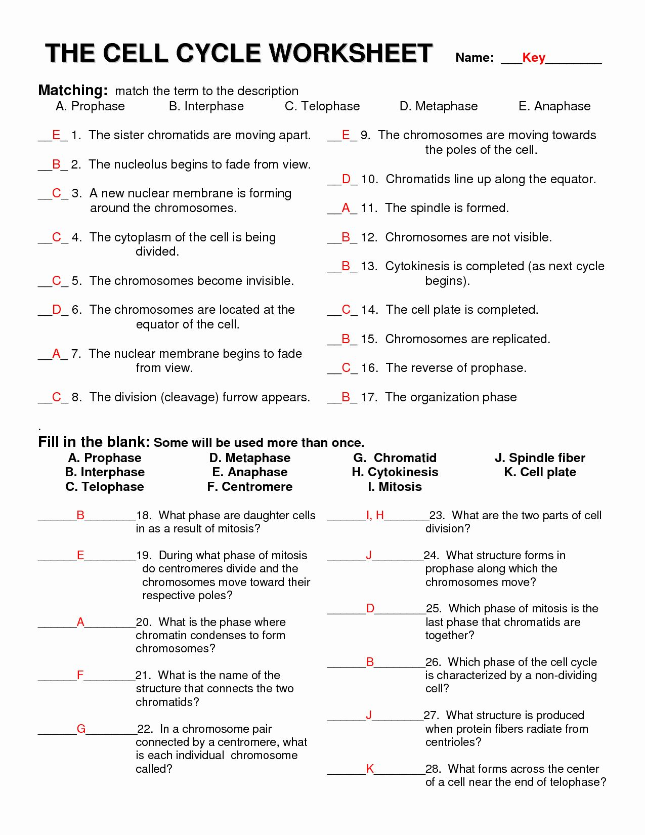Meiosis Matching Worksheet Answer Key Best Of 13 Best Of