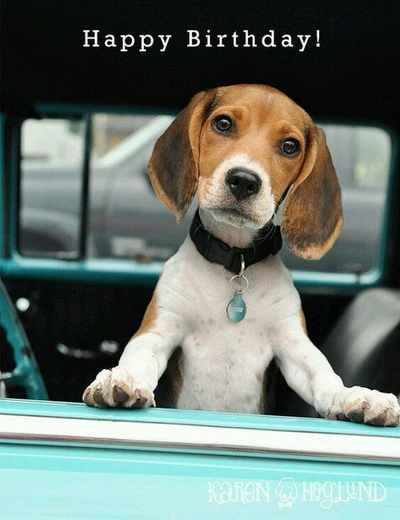 Pin By Kay Turnmire On Beagles Beagle Puppy Cute Beagles Beagle