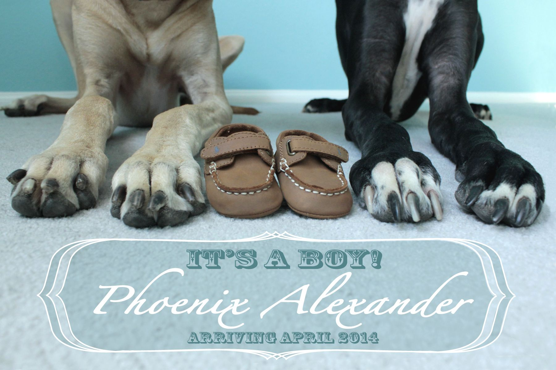 Gender Announcement With Dogs Great Dane Paws Fall Baby