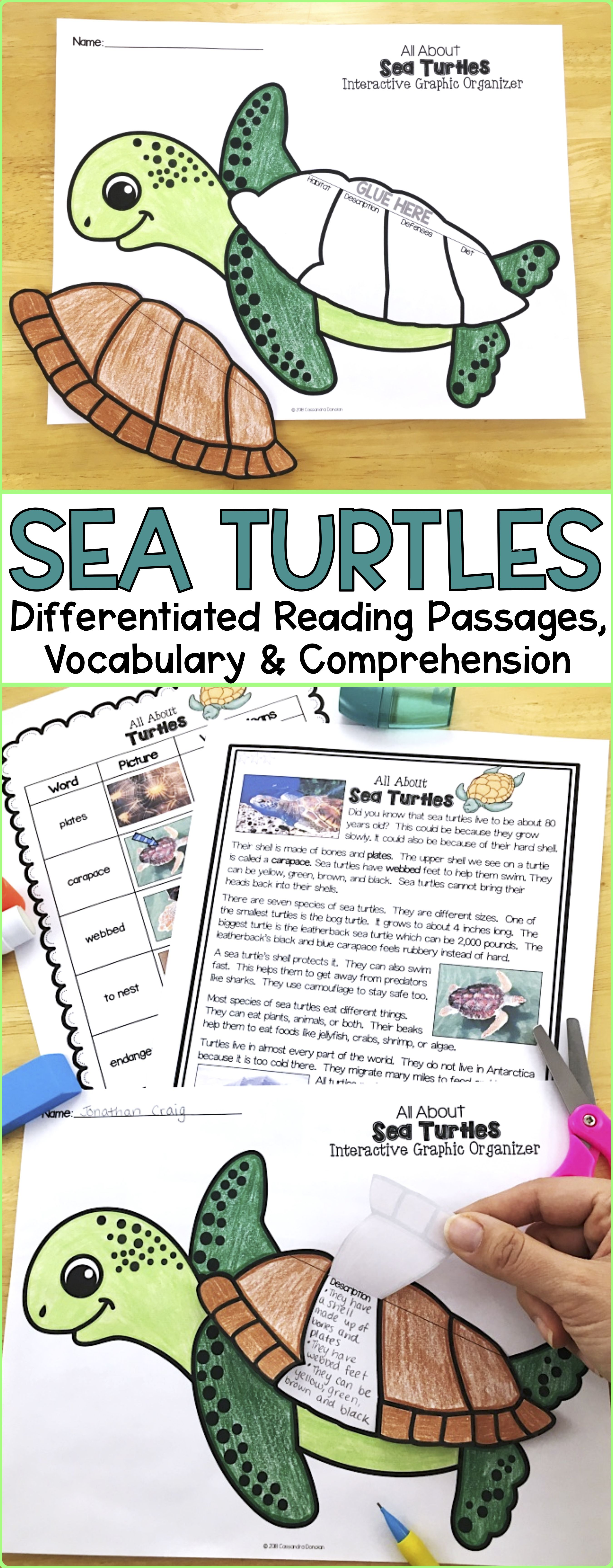 Ocean Animals Reading Sea Turtles Differentiated Passages