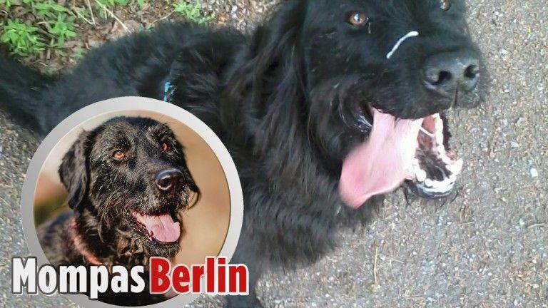 Mompas Berlin Hunde Zu Weihnachten Verschenken Bitte Nicht Hunde Verschenken Tiere