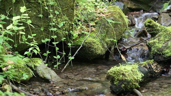 Beautiful Small Brook | Beautiful, Plants, Waterfall