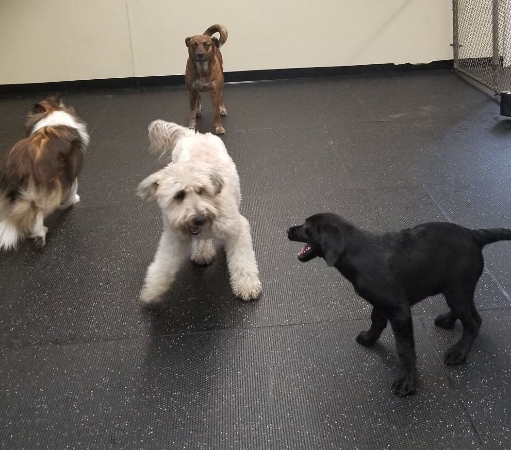 "Shelby ""OK Buddy! Let's see what you've got!"" DogAntics"