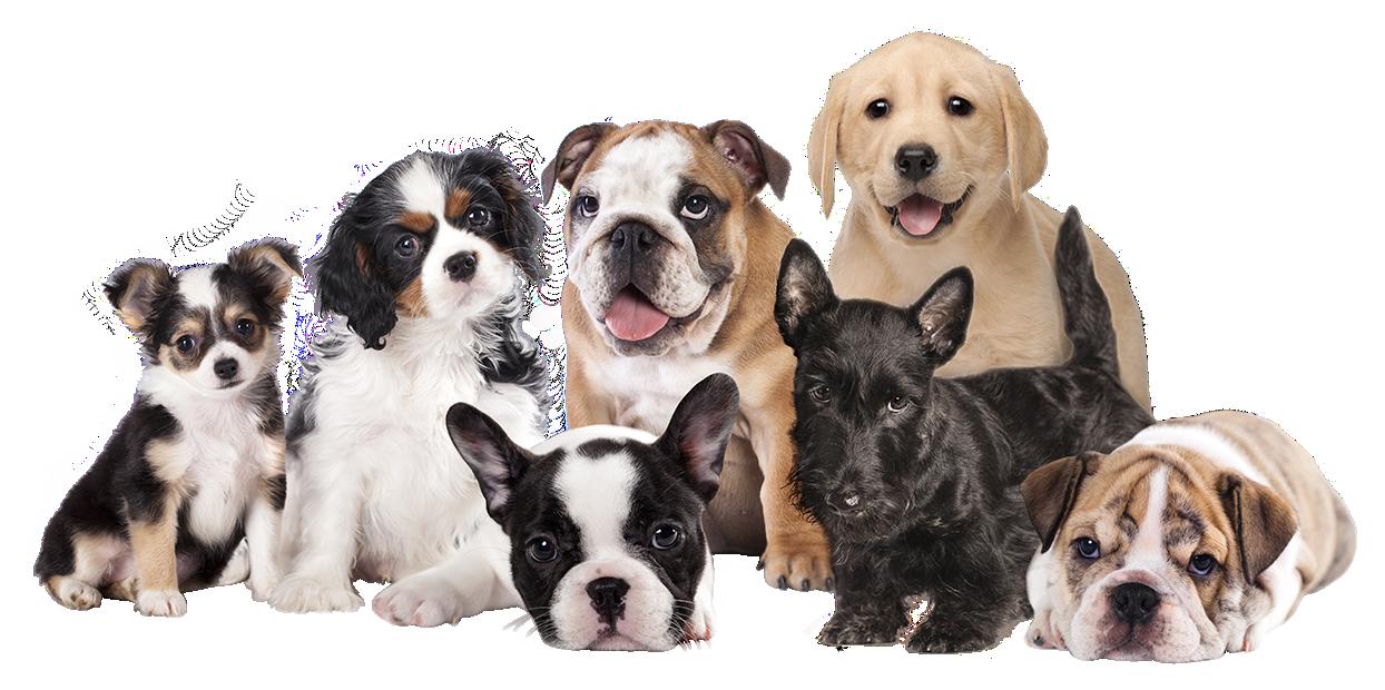 Dog Breed Selector Puppy Finder Choosing A Dog Dog Breed Selector Dog Breeds Cockapoo Dog