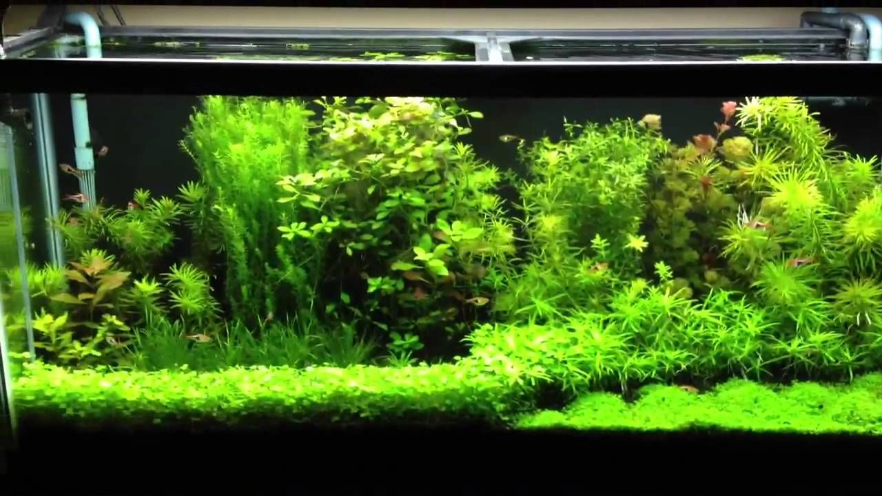 Christmas Moss Carpet.Christmas Moss Carpet Google Search Fish Tank Fish