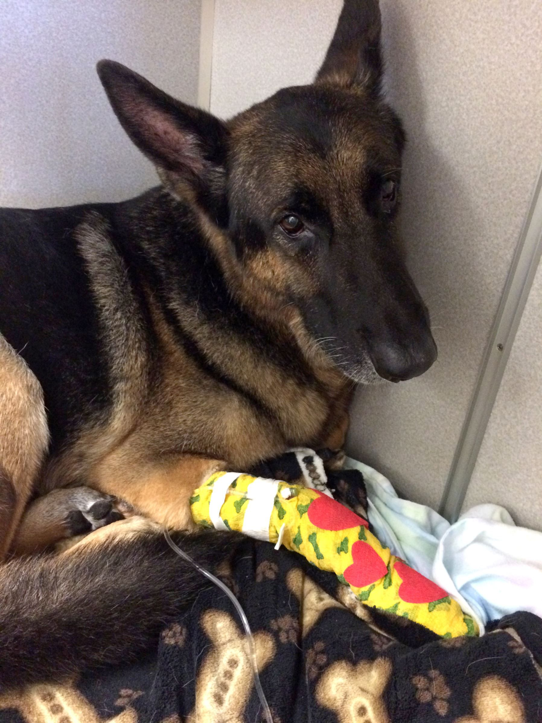 German Shepherd Helps Rescue Children From Burning Home Dog Help Dogs Dog Leads