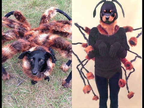 Mutant Spider Dog Costume Diy Tutorial Youtube Spider Costume