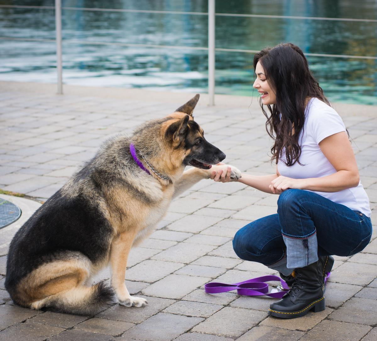 German Shepherd Pool Party Dog Training Training Your Dog Dog
