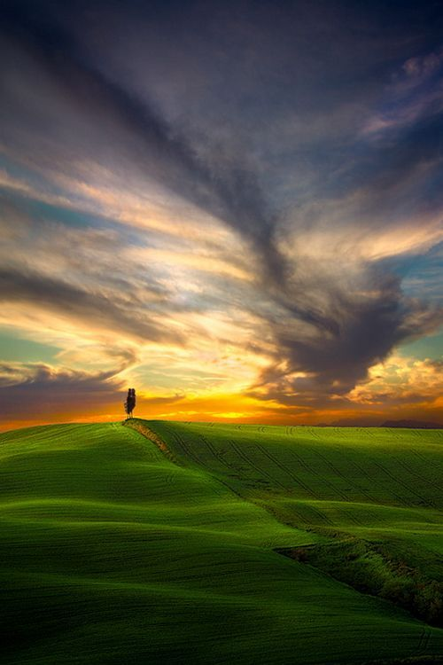 Cypress Tree at sunset in Tuscany.