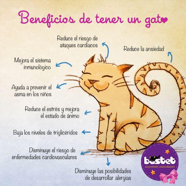 Cuales Son Las Ventajas De Tener Un Gato Una De Ellas Es Que Reduce El Riesgo Del Ritmo Cardiaco Aunque No Lo Cr Gatos Mamá De Perro Curiosidades Animales