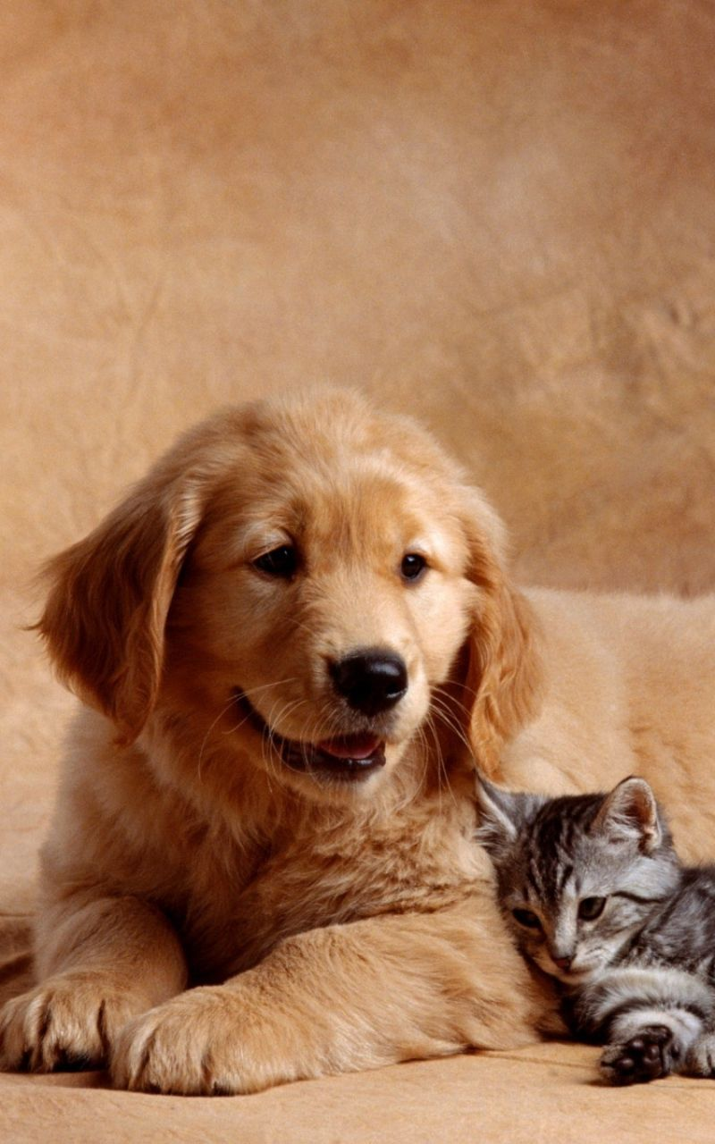 Download Wallpaper 800x1280 Dog Cat Kitten Baby Hd Background