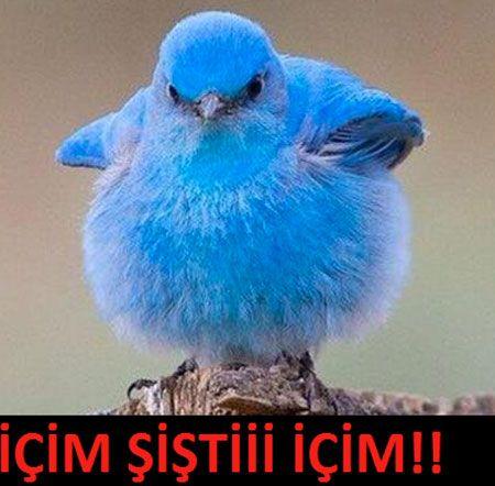 #twitterbannedinturkey  #twitterblockedinturkey
