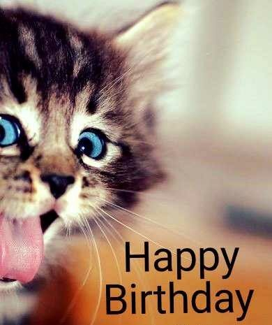 Pin By Diane Anselm On Visuals Cat Birthday Happy Birthday