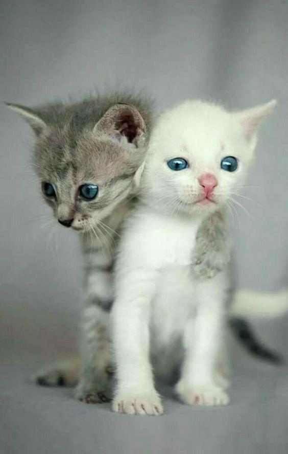 Idea by King Hunter on Egypt cat Cute cats, Kittens