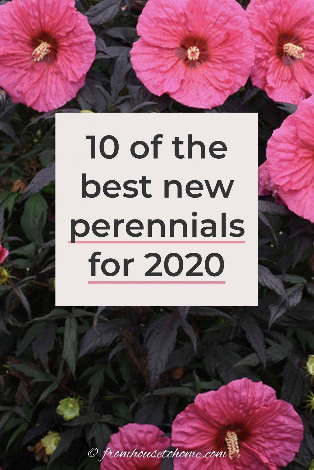 10 Of The Best New Perennials For 2020 Perennials Front Garden