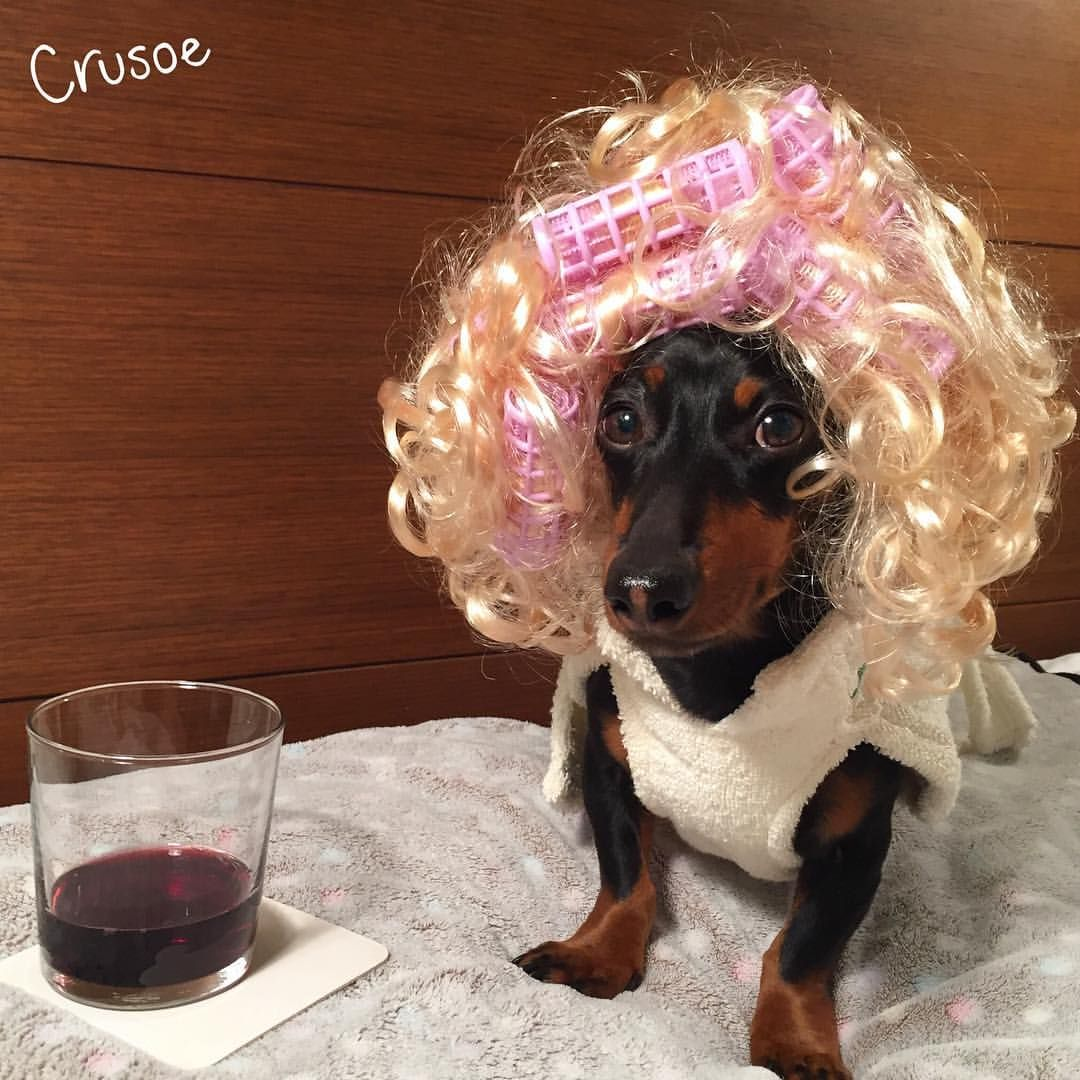 """Getting ready for my last night in NYC, thinking I might just spark a revival of #sexandthecity "" ~ Crusoe"