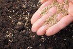Koriander pflanzen und pflegen – So wird's gemacht #kräutergartenbalkon