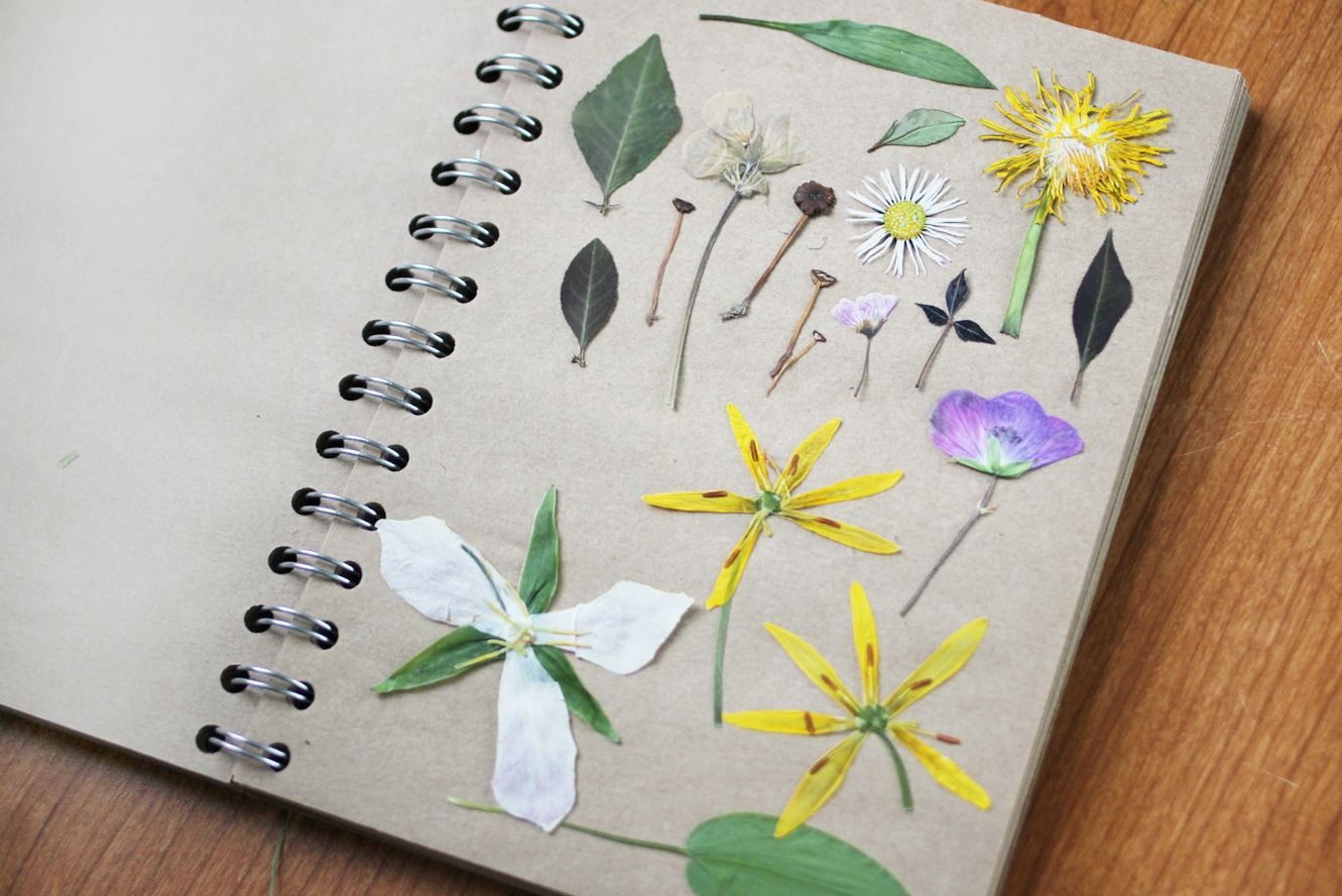 The dainty squid pressed flowers fun outdoor project to do with such a pretty idea for a pressed flower notebook mightylinksfo