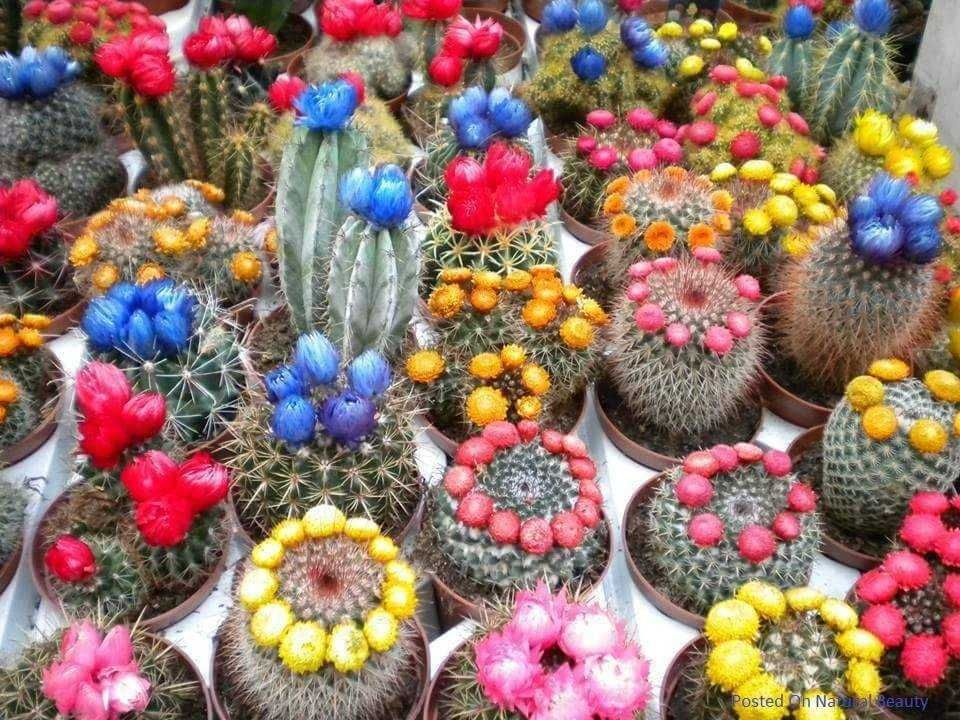 A nice collection of colorful cactus | Luxury Home