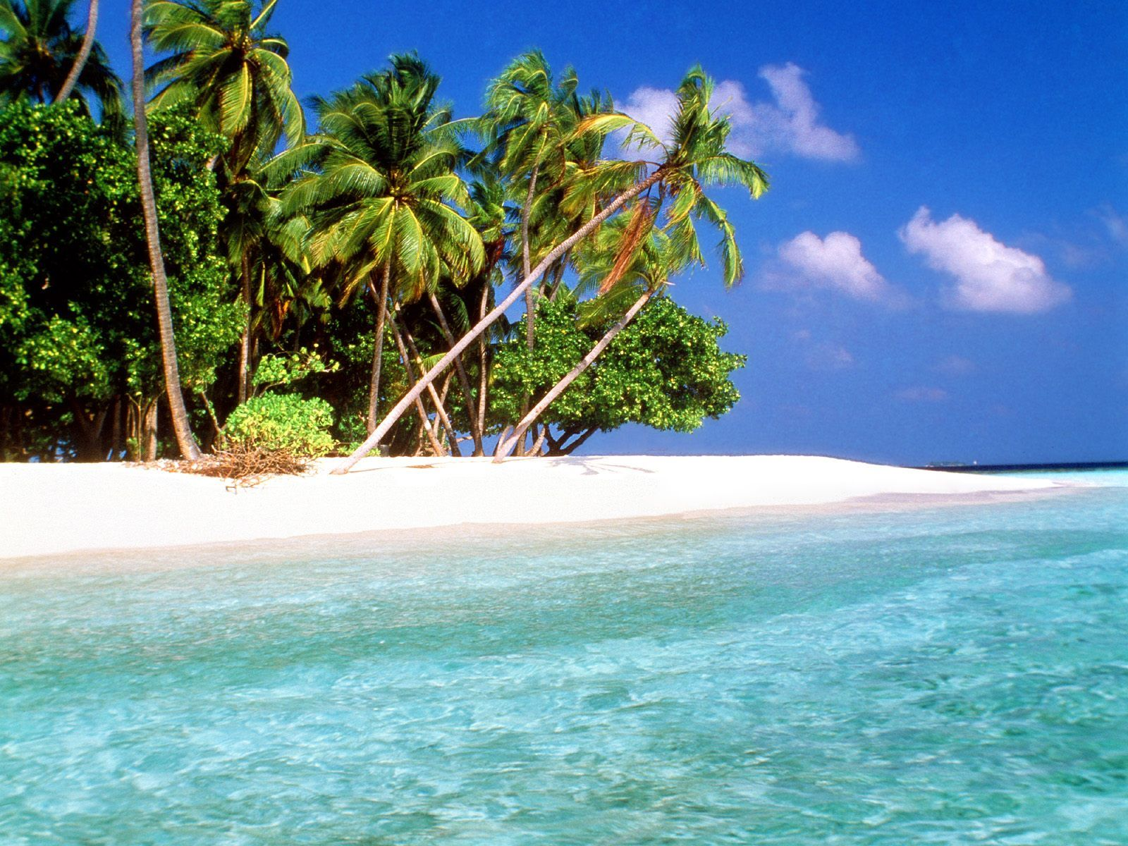 Tropical Islands Wallpapers Download Free Trade Winds Maldive Islands Wallpapers Photos Pict Beach Scenery Tropical Island Beach Tropical Islands Paradise