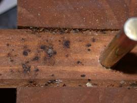 Wood bugs in furniture images galleries with a bite How to remove bed bugs from couch