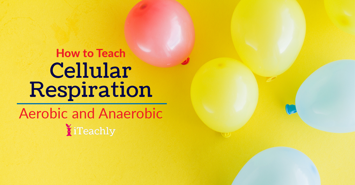 Cellular Respiration Worksheet & Lab in