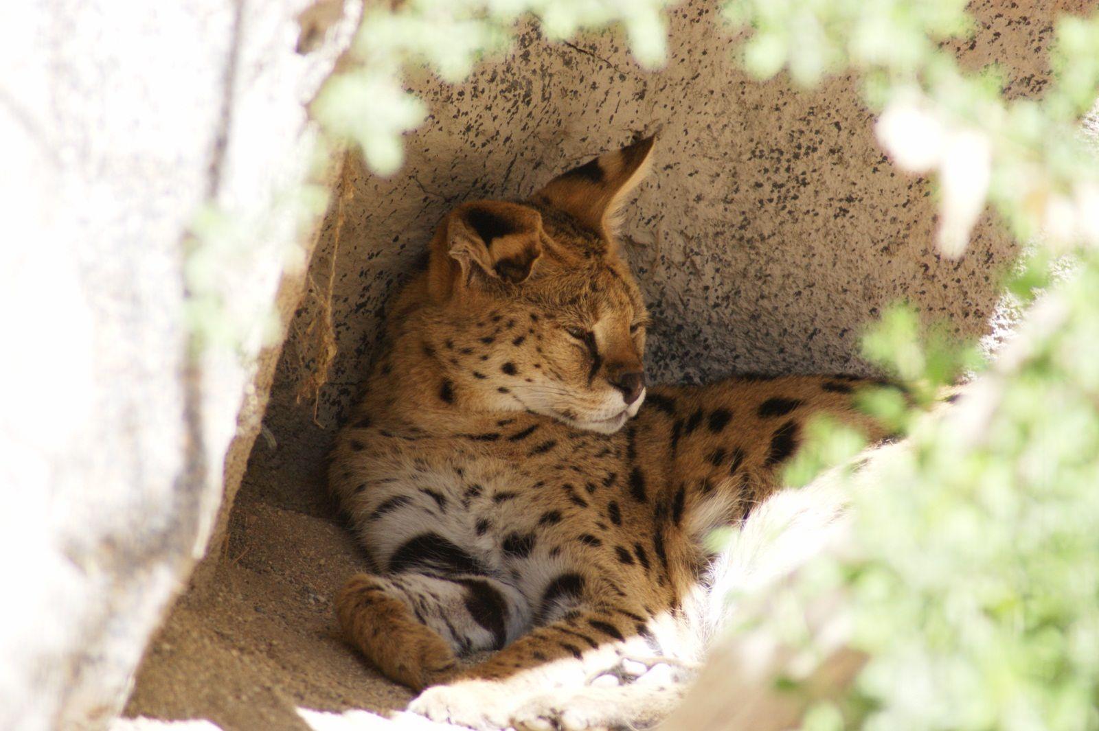 851b50dd49744f3565e55385bd2032dc - The Living Desert Zoo And Gardens Palm Desert