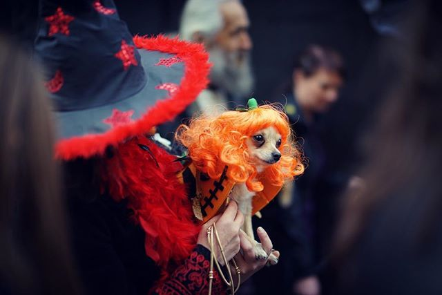Beauty! #london #igerslondon #alldogsmatter