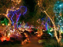 851c527864af810c4f9e752368ff0d81 - Ethel M Chocolate Factory And Botanical Cactus Gardens Las Vegas