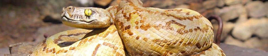 Snake Cake by Katrina | at Redleaf Farm