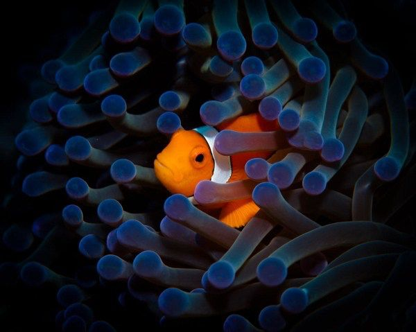 Pin By Martha Tolbert Shideler Gauthi On Creatures Of The Sea Underwater Animals Fishing Photography Underwater Photography